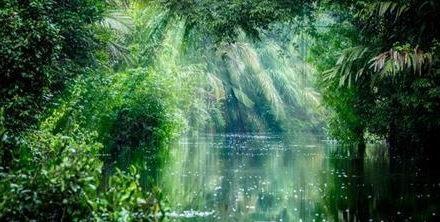Projekt Eden - Puszcza Tropikalna na Wyspach Brytyjskich